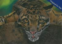 Pastel Pencil Drawing of the beautiful and enigmatic Clouded Leopard. PRINTS AVAILABLE.