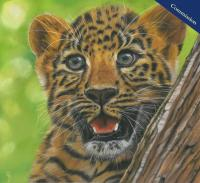 "Pastel Pencil Drawing of a leopard cub. ""Dorothy"" Who resides at San Diego Zoo. PRINTS AVAILABLE"