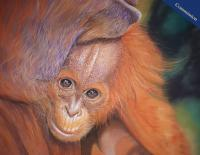 Pastel Pencil drawing of a Mother Orangutan and her baby