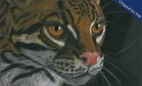 Pastel pencil drawing of the beautiful Diego. Ocelot residing at San Diego Zoo. PRINTS AVAILABLE.