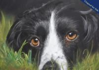 Pastel Pencil Drawing of a Springer Spaniel. PRINTS AVAILABLE.