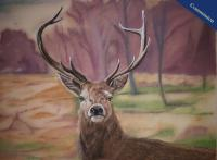 Pastel Pencil Drawing of a Red Deer Stag.